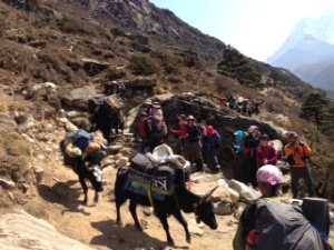 Hiking with the yaks