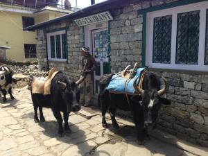 Yaks in Lukla